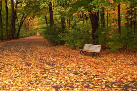 municipal-and-regional-park-nature-interpretation-centre-parc-du-bois-de-coulonge-343354011