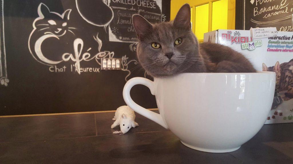 Vegetarian Restaurants Montreal Cat Cafe