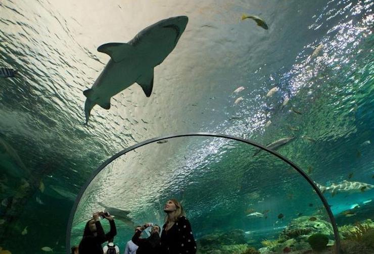 ripley's aquarium downtown toronto things to do in toronto