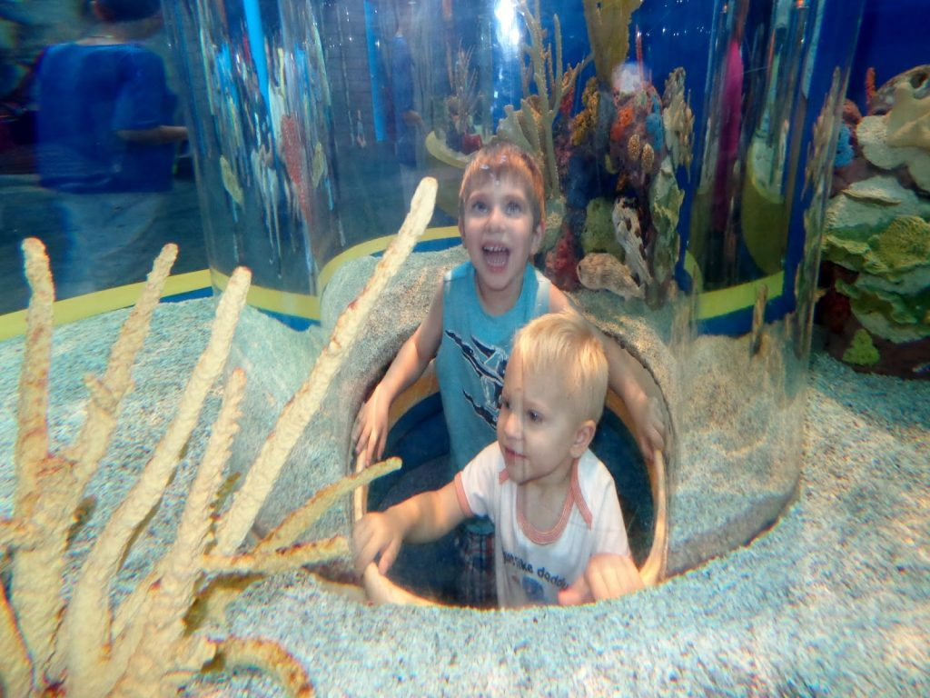 aquarium Things to do with kids in Toronto