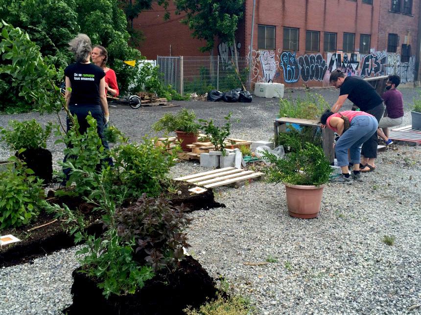 people planting at parc des gorilles