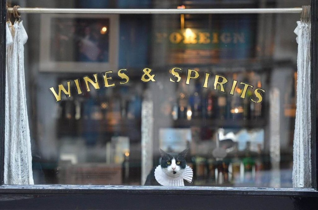 Cat with ruffled collar sits in pub window