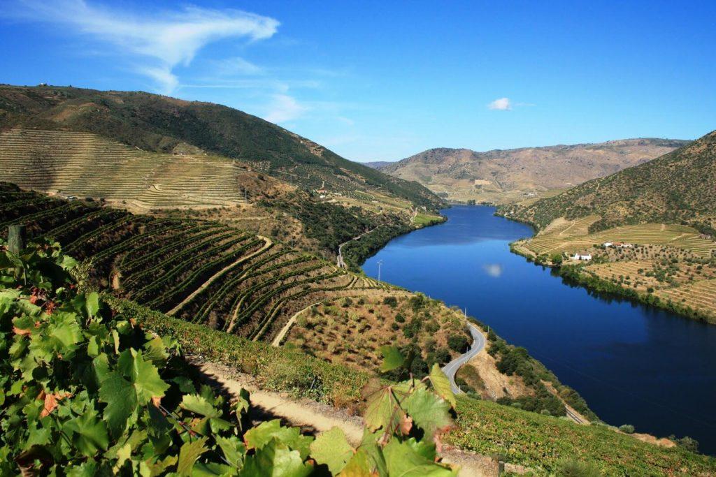 duoro region wine